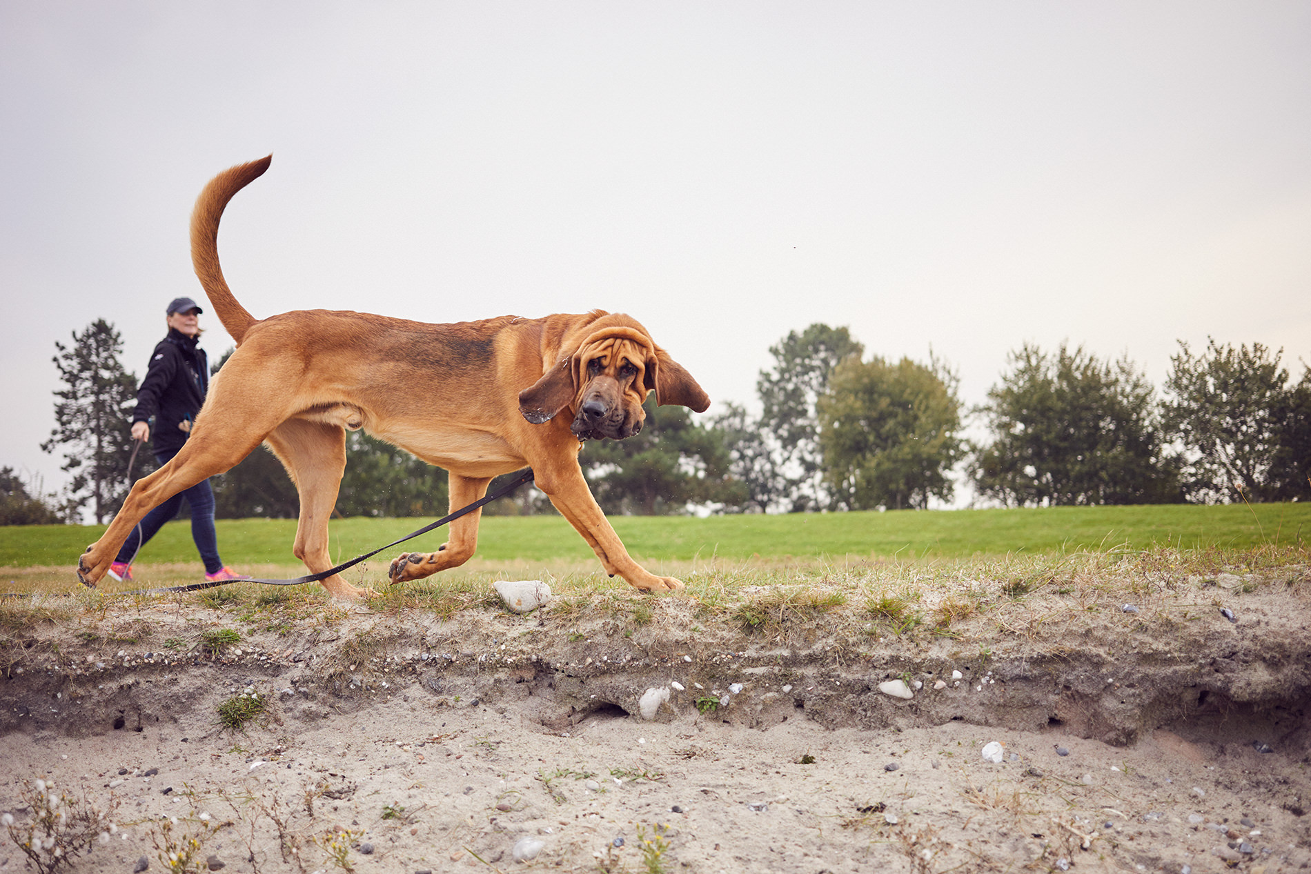 copyright_julia-marie-werner_DOGS_Mantrailing_07